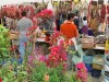Alles bio: ökologische Produkte auf Mallorca- die Adressen