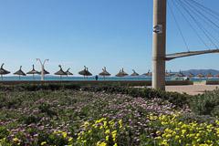 Frühling an der Playa de Plama